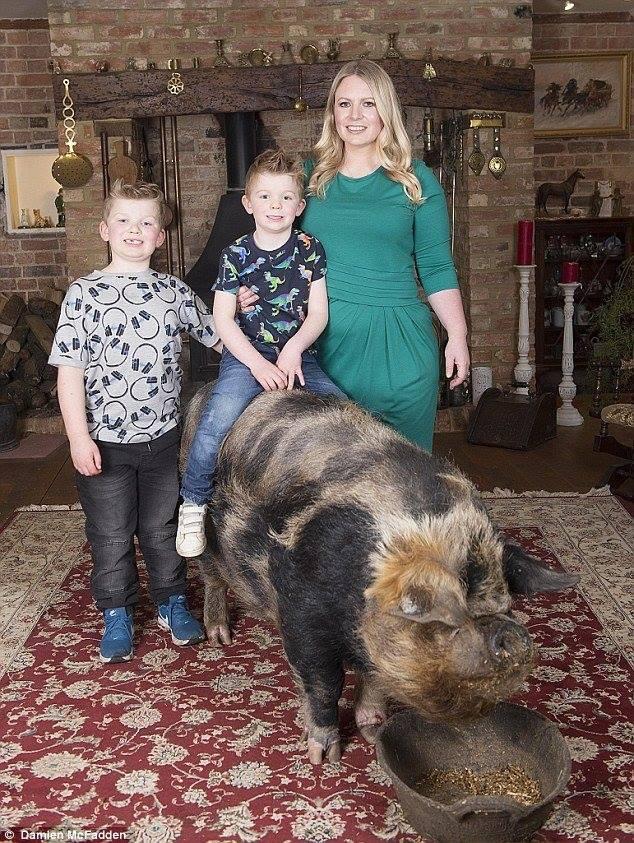 В Англии женщина воспитывает дома свинью весом 222 кг