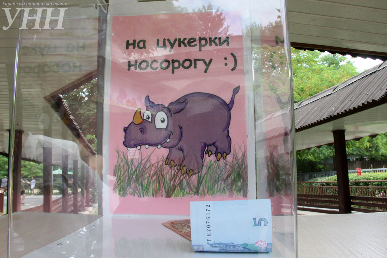 У Київському зоопарку привітали носорога-довгожителя із днем народження - фото 7