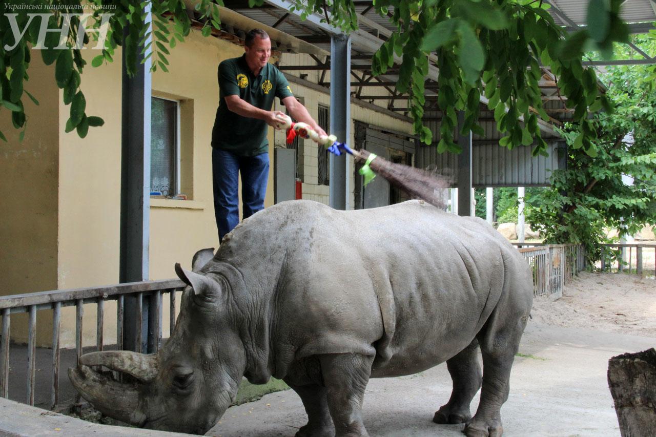 У Київському зоопарку привітали носорога-довгожителя із днем народження - фото 3