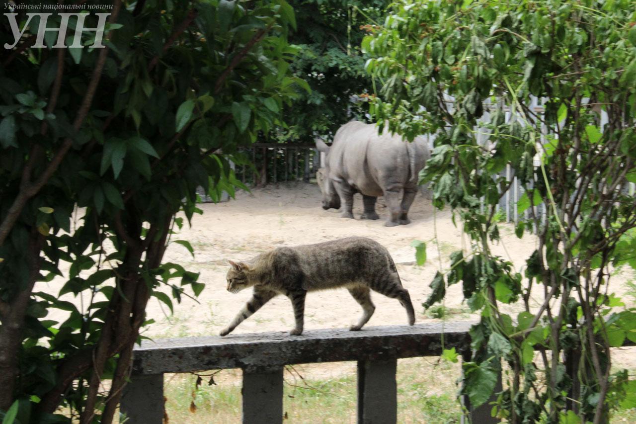 У Київському зоопарку привітали носорога-довгожителя із днем народження - фото 15
