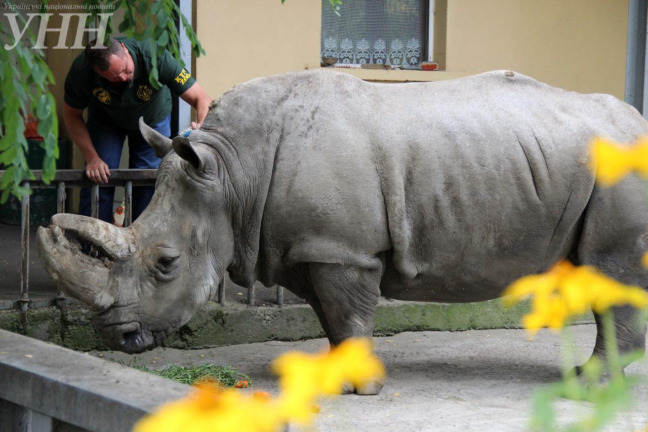 У Київському зоопарку привітали носорога-довгожителя із днем народження - фото 4