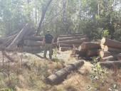 Незаконну пилораму викрили на Житомирщині - фото 10