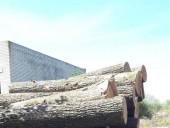 Незаконну пилораму викрили на Житомирщині - фото 4