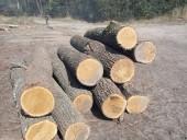 Незаконну пилораму викрили на Житомирщині - фото 8