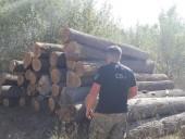 Незаконну пилораму викрили на Житомирщині - фото 6