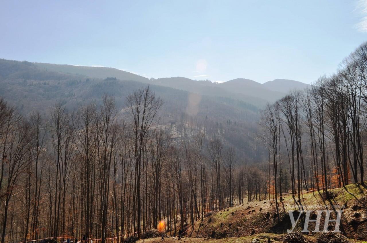 У Рахівському районі висадили шість тисяч дерев