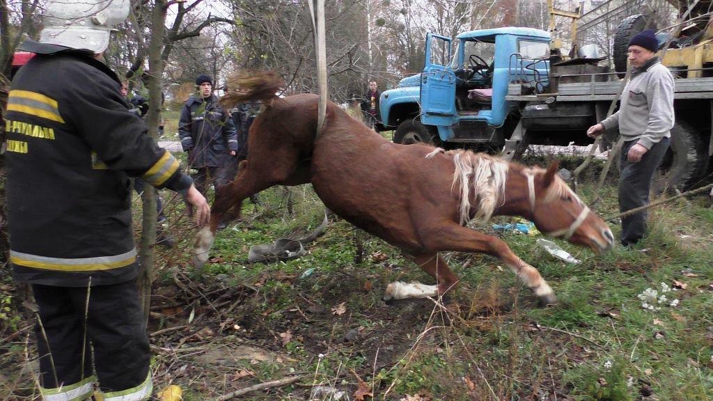 ВоЛьвовской области «всем миром» спасали лошадь, упавшую вканализацию