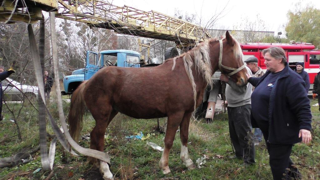 Cотрудники экстренных служб вытянули коня изканализации наЛьвовщине