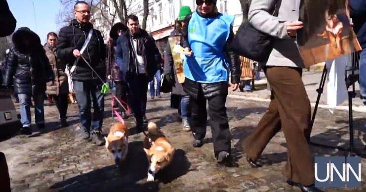 Марш спасенных собак впервый раз прошел вОдессе