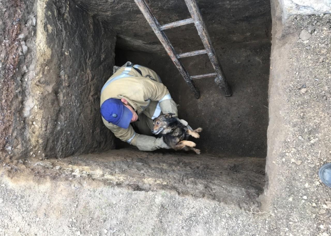 """Результат пошуку зображень за запитом """"рятувальники витягли собаку із ями"""""""