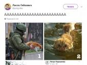 Пост Порошенка про котиків запустив флешмоб у соцмережах - фото 6
