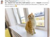 Пост Порошенка про котиків запустив флешмоб у соцмережах - фото 1