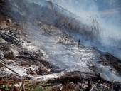Пожары в Новой Зеландии не утихают - фото 1