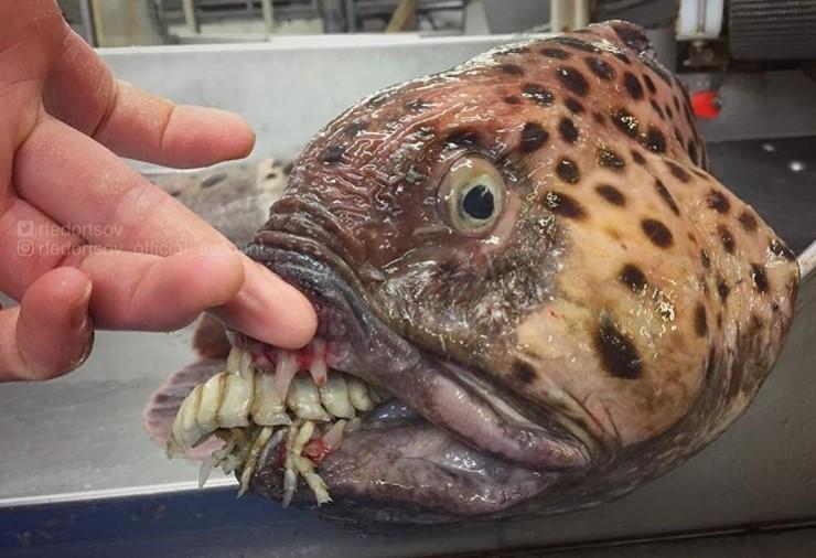 Парад химерних риб: моряк показав мешканців морських глибин - фото 2