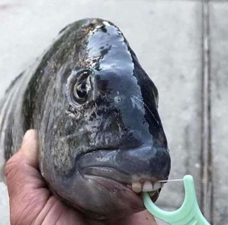 Парад химерних риб: моряк показав мешканців морських глибин - фото 21