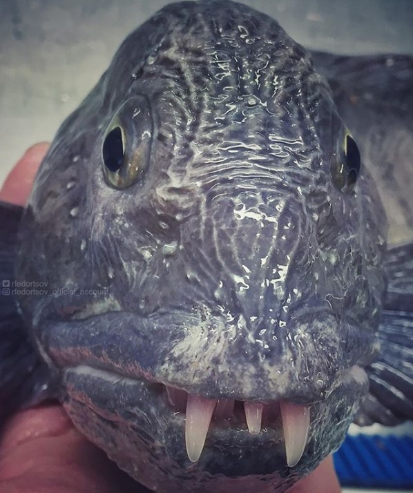 Парад химерних риб: моряк показав мешканців морських глибин - фото 20