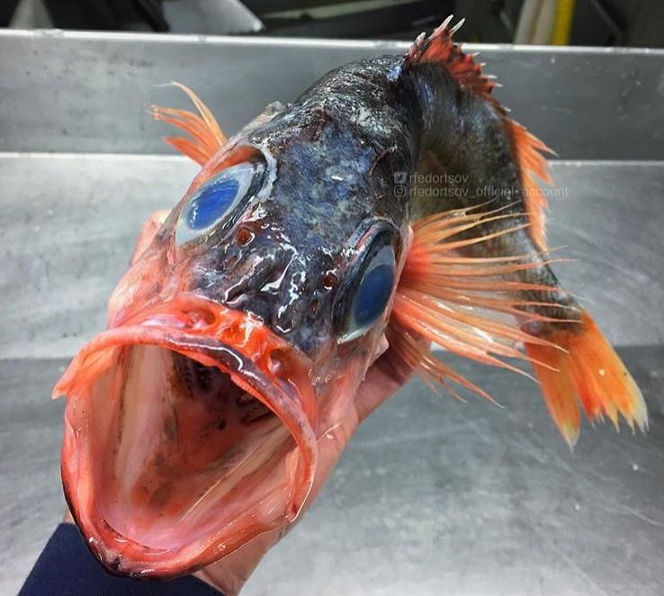 Парад химерних риб: моряк показав мешканців морських глибин - фото 13