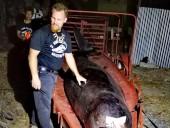 В желудке умершего кита нашли 40 кг пластика - фото 9
