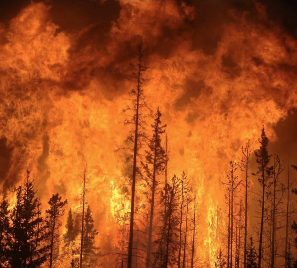 Пожежі в Австралії: загинули 24 людини і майже 500 тисяч тварин - фото 14
