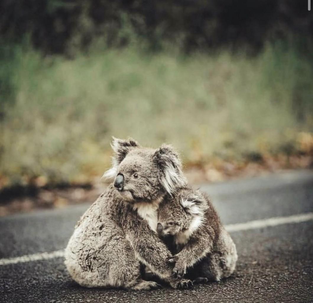 Пожежі в Австралії: загинули 24 людини і майже 500 тисяч тварин - фото 1