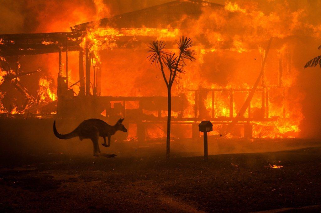 Пожежі в Австралії: загинули 24 людини і майже 500 тисяч тварин - фото 11
