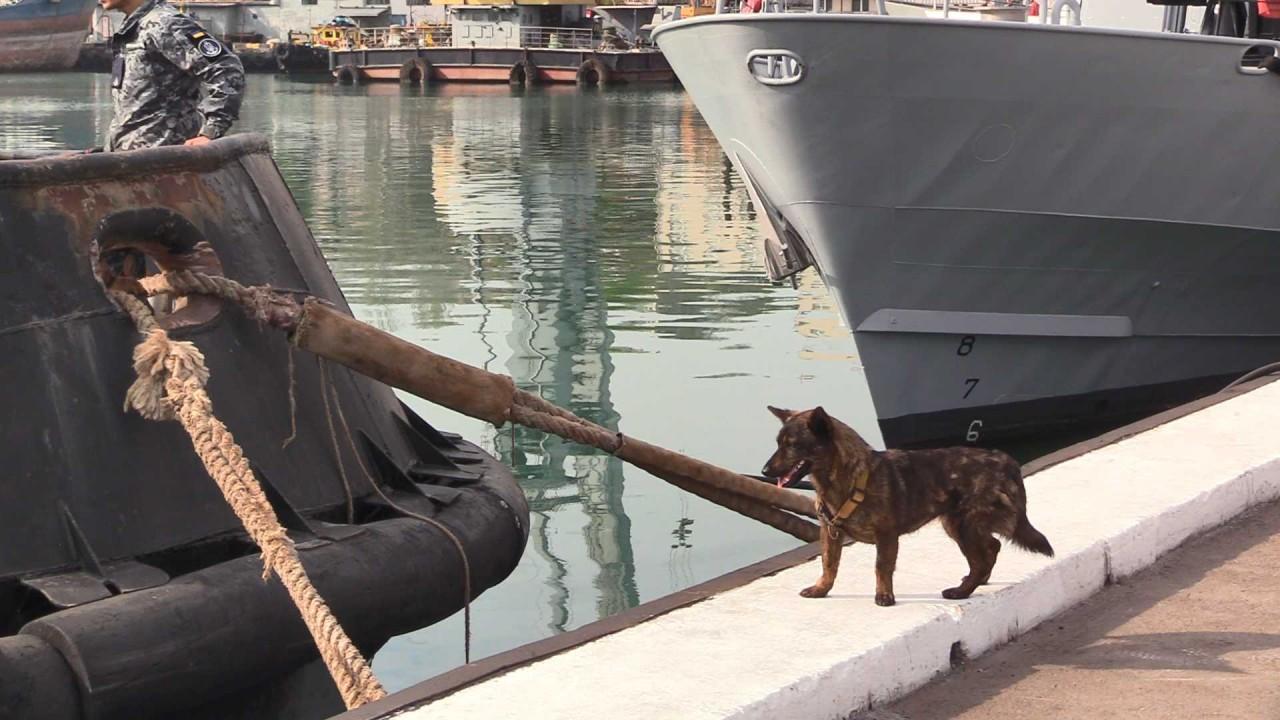 """Собака Джессі, яка побувала у полоні РФ, повернулась на """"Яни Капу"""" - фото 2"""