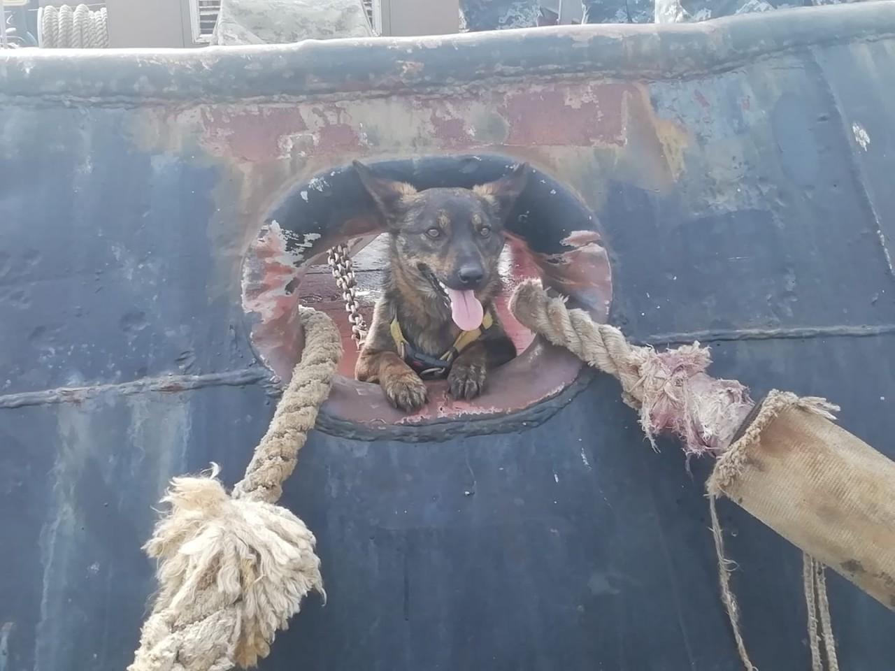 """Собака Джессі, яка побувала у полоні РФ, повернулась на """"Яни Капу"""" - фото 4"""