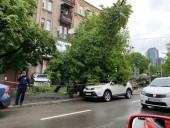 В центре Киева на автомобиль упало дерево - фото 2