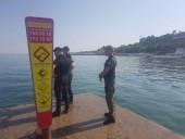 На одесском пляже застряла группа дельфинов: их пытаются спасти - фото 1