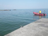 На одесском пляже застряла группа дельфинов: их пытаются спасти - фото 2