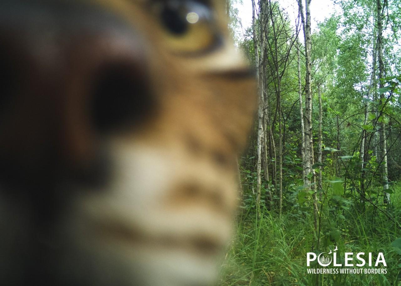 """Чей """"глаз"""" там подмигивает? Появились снимки животных, которые рассматривают фотоловушки в Чернобыльском заповеднике - фото 5"""