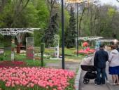 Над композицией работали более 15 дизайнеров: на Певческом открыли выставку с более 700 тысяч тюльпанов - фото 15