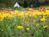 Над композицией работали более 15 дизайнеров: на Певческом открыли выставку с более 700 тысяч тюльпанов - фото 23
