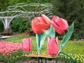 Над композицией работали более 15 дизайнеров: на Певческом открыли выставку с более 700 тысяч тюльпанов - фото 14