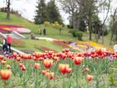 Над композицией работали более 15 дизайнеров: на Певческом открыли выставку с более 700 тысяч тюльпанов - фото 27
