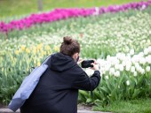 Над композицией работали более 15 дизайнеров: на Певческом открыли выставку с более 700 тысяч тюльпанов - фото 33