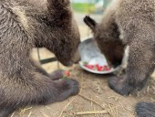 Из-за жестокого обращения со страусиной фермы под Киевом забрали медвежат и львят - фото 8