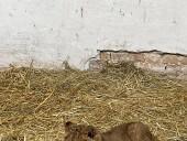 Из-за жестокого обращения со страусиной фермы под Киевом забрали медвежат и львят - фото 5