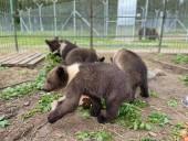 Из-за жестокого обращения со страусиной фермы под Киевом забрали медвежат и львят - фото 11