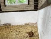 Из-за жестокого обращения со страусиной фермы под Киевом забрали медвежат и львят - фото 2