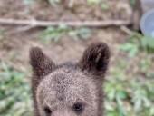 Из-за жестокого обращения со страусиной фермы под Киевом забрали медвежат и львят - фото 6