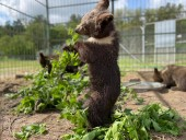 Из-за жестокого обращения со страусиной фермы под Киевом забрали медвежат и львят - фото 7