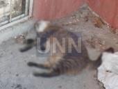 Выбросили как мусор: в столице кота сбросили из окна многоэтажки - фото 4