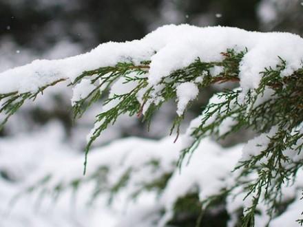 22 січня вУкраїні температура знизиться до10-17 градусів морозу