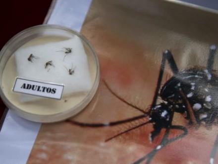 В РФ зарегистрировали четвертый случай заражения вирусом Зика