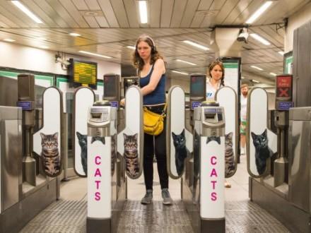Наодній із станцій лондонського метро рекламу замінили назображення котів