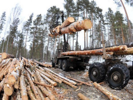 ВКабмине обещают посадить всех, кто причастен квырубке леса