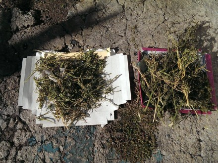 Правоохранители вДнепропетровской области изъяли наркотиков иоружия на250 тыс. грн