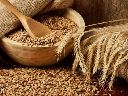 Посостоянию на15декабря Украина экспортировала 20,1 млн тонн зерна
