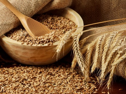 Украина ссамого начала 2016/2017 МГэкспортировала 20,1 млн тонн зерна